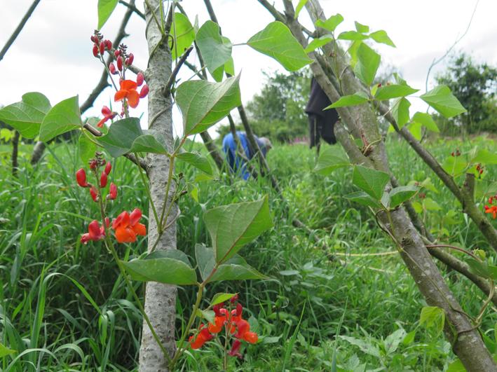 Växtkraft åker i Nedregården, Träslöv